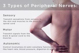 peripheral-nerve-types.jpg